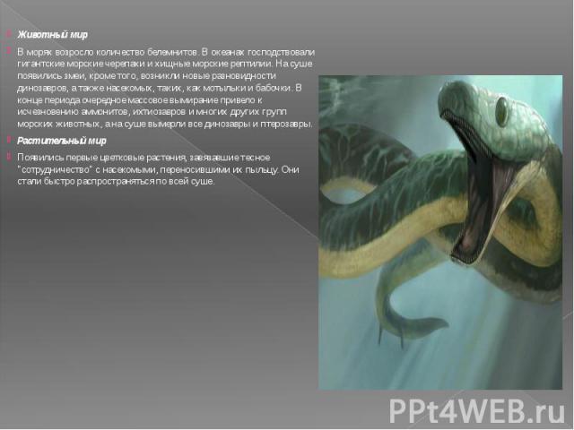 Животный мир Животный мир В морях возросло количество белемнитов. В океанах господствовали гигантские морские черепахи и хищные морские рептилии. На суше появились змеи, кроме того, возникли новые разновидности динозавров, а также насекомых, таких, …