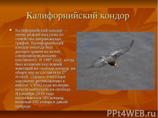 Калифорнийский кондор Калифорнийский кондор — очень редкий вид птиц из семейства