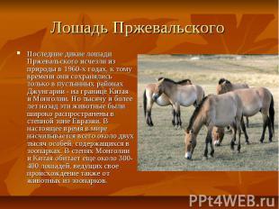 Лошадь Пржевальского Последние дикие лошади Пржевальского исчезли из природы в 1