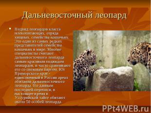 Дальневосточный леопард Подвид леопардов класса млекопитающих, отряда хищных, се