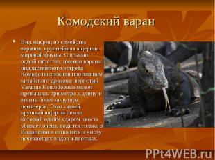 Комодский варан Вид ящериц из семейства варанов, крупнейшая ящерица мировой фаун
