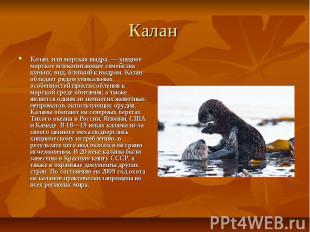 Калан Калан, или морская выдра, — хищное морское млекопитающее семейства куньих,