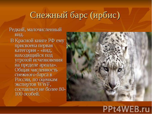 Cнежный барс (ирбис) Редкий, малочисленный вид. В Красной книге РФ ему присвоена первая категория - «вид, находящийся под угрозой исчезновения на пределе ареала». Общая численность снежного барса в России, по оценкам экспертов WWF, составляет …