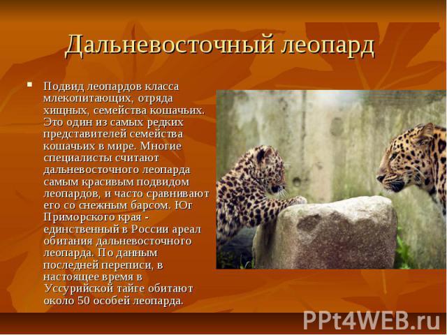 Дальневосточный леопард Подвид леопардов класса млекопитающих, отряда хищных, семейства кошачьих. Это один из самых редких представителей семейства кошачьих в мире. Многие специалисты считают дальневосточного леопарда самым красивым подвидом леопард…