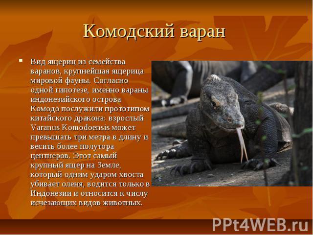 Комодский варан Вид ящериц из семейства варанов, крупнейшая ящерица мировой фауны. Согласно одной гипотезе, именно вараны индонезийского острова Комодо послужили прототипом китайского дракона: взрослый Varanus Komodoensis может превышать три метра в…