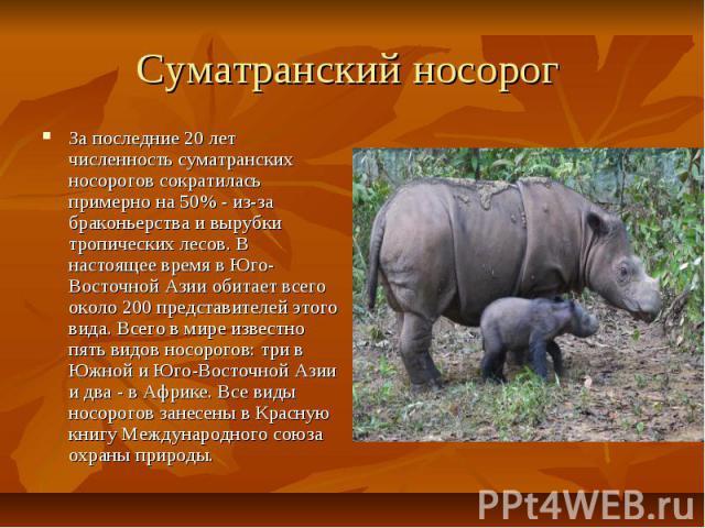 Суматранский носорог За последние 20 лет численность суматранских носорогов сократилась примерно на 50% - из-за браконьерства и вырубки тропических лесов. В настоящее время в Юго-Восточной Азии обитает всего около 200 представителей этого вида. Всег…