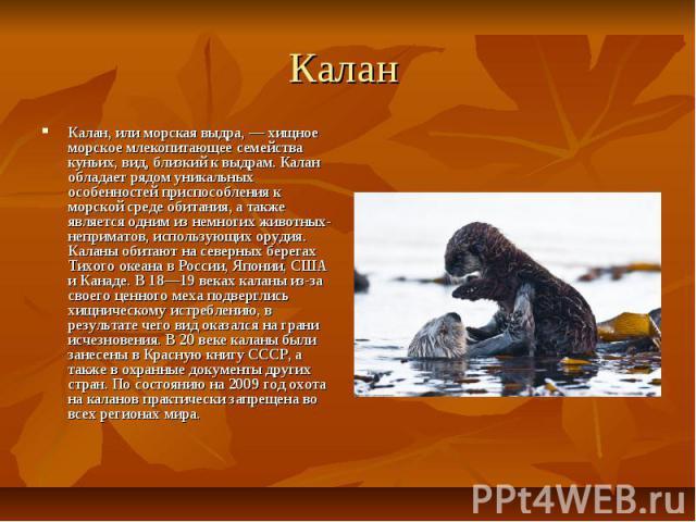 Калан Калан, или морская выдра, — хищное морское млекопитающее семейства куньих, вид, близкий к выдрам. Калан обладает рядом уникальных особенностей приспособления к морской среде обитания, а также является одним из немногих животных-неприматов, исп…