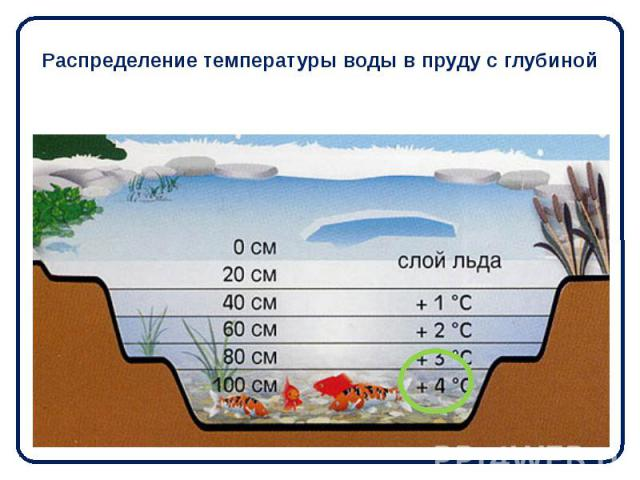 Распределение температуры воды в пруду с глубиной