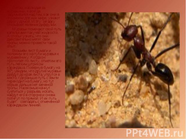 Летом, наблюдая за муравьями, я всегда задумывался над тем, как они в огромном для них мире, узнают дорогу домой. И эту загадку открывает явление диффузии. Летом, наблюдая за муравьями, я всегда задумывался над тем, как они в огромном для них мире, …