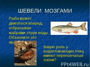 ШЕВЕЛИ МОЗГАМИ Рыба может двигаться вперед, отбрасывая жабрами струи воды. Объяс