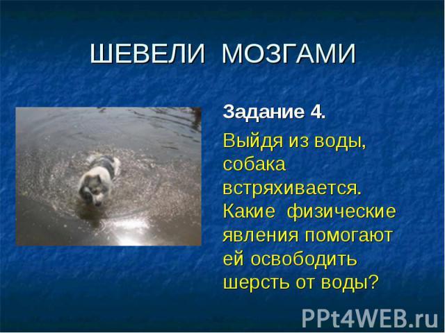 ШЕВЕЛИ МОЗГАМИ Задание 4. Выйдя из воды, собака встряхивается. Какие физические явления помогают ей освободить шерсть от воды?