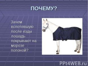 Зачем вспотевшую после езды лошадь покрывают на морозе попоной? Зачем вспотевшую