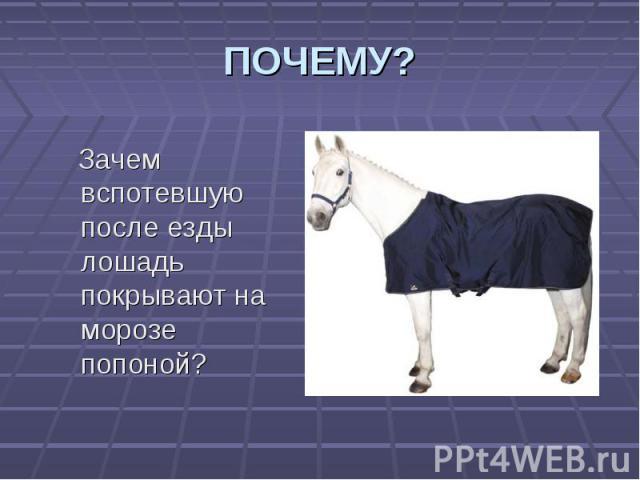 Зачем вспотевшую после езды лошадь покрывают на морозе попоной? Зачем вспотевшую после езды лошадь покрывают на морозе попоной?