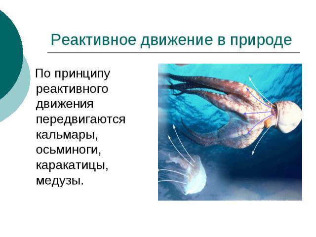 Реактивное движение в природе По принципу реактивного движения передвигаются кальмары, осьминоги, каракатицы, медузы.