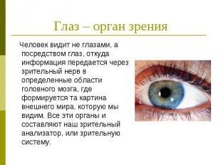 Глаз – орган зрения Человек видит не глазами, а посредством глаз, откуда информа