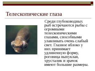 Телескопические глаза Среди глубоководных рыб встречаются рыбы с огромными телес