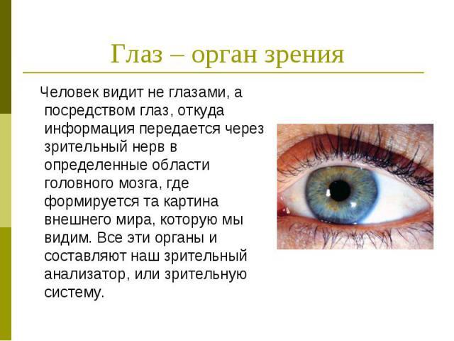 Глаз – орган зрения Человек видит не глазами, а посредством глаз, откуда информация передается через зрительный нерв в определенные области головного мозга, где формируется та картина внешнего мира, которую мы видим. Все эти органы и составляют наш …