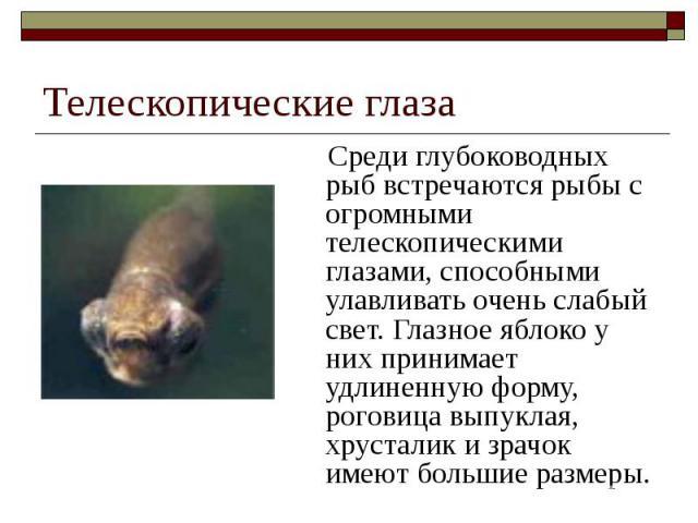 Телескопические глаза Среди глубоководных рыб встречаются рыбы с огромными телескопическими глазами, способными улавливать очень слабый свет. Глазное яблоко у них принимает удлиненную форму, роговица выпуклая, хрусталик и зрачок имеют большие размеры.