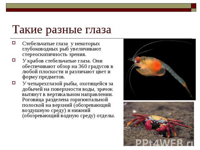 Такие разные глаза Стебельчатые глаза у некоторых глубоководных рыб увеличивают стереоскопичность зрения. У крабов стебельчатые глаза. Они обеспечивают обзор на 360 градусов в любой плоскости и различают цвет и форму предметов. У четырехглазой рыбы,…
