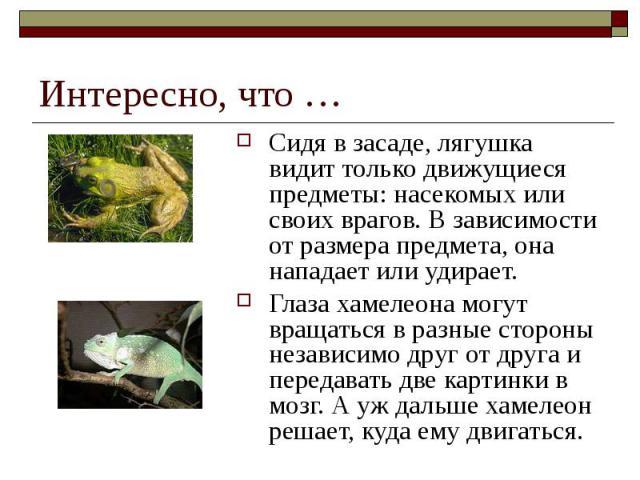 Интересно, что … Сидя в засаде, лягушка видит только движущиеся предметы: насекомых или своих врагов. В зависимости от размера предмета, она нападает или удирает. Глаза хамелеона могут вращаться в разные стороны независимо друг от друга и передавать…