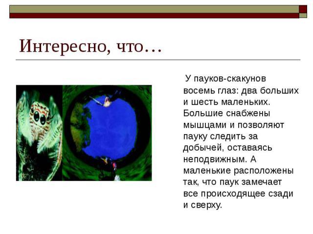 Интересно, что… У пауков-скакунов восемь глаз: два больших и шесть маленьких. Большие снабжены мышцами и позволяют пауку следить за добычей, оставаясь неподвижным. А маленькие расположены так, что паук замечает все происходящее сзади и сверху.