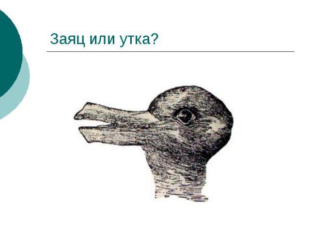 Заяц или утка?