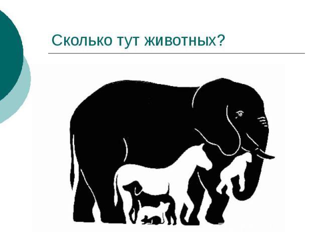 Сколько тут животных?