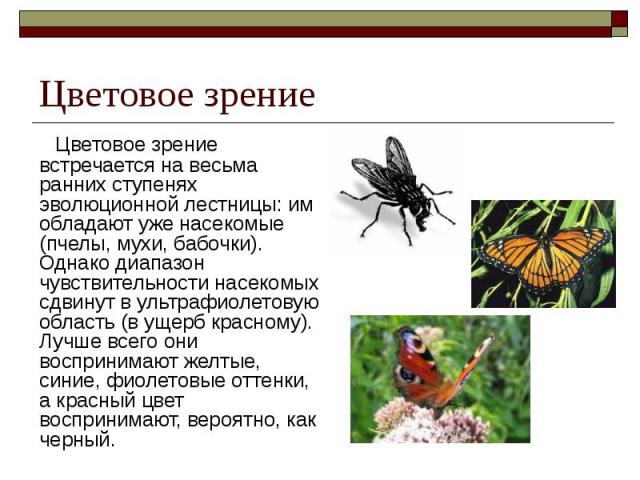 Цветовое зрение Цветовое зрение встречается на весьма ранних ступенях эволюционной лестницы: им обладают уже насекомые (пчелы, мухи, бабочки). Однако диапазон чувствительности насекомых сдвинут в ультрафиолетовую область (в ущерб красному). Лучше вс…