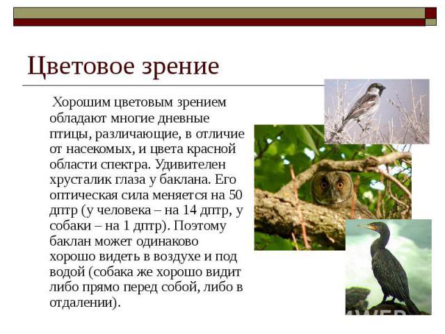 Цветовое зрение Хорошим цветовым зрением обладают многие дневные птицы, различающие, в отличие от насекомых, и цвета красной области спектра. Удивителен хрусталик глаза у баклана. Его оптическая сила меняется на 50 дптр (у человека – на 14 дптр, у с…
