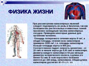 ФИЗИКА ЖИЗНИ При рассмотрении капиллярных явлений следует подчеркнуть их роль в