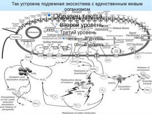 Так устроена подземная экосистема с единственным живым организмом