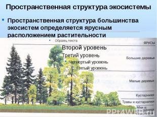 Пространственная структура экосистемы Пространственная структура большинства эко