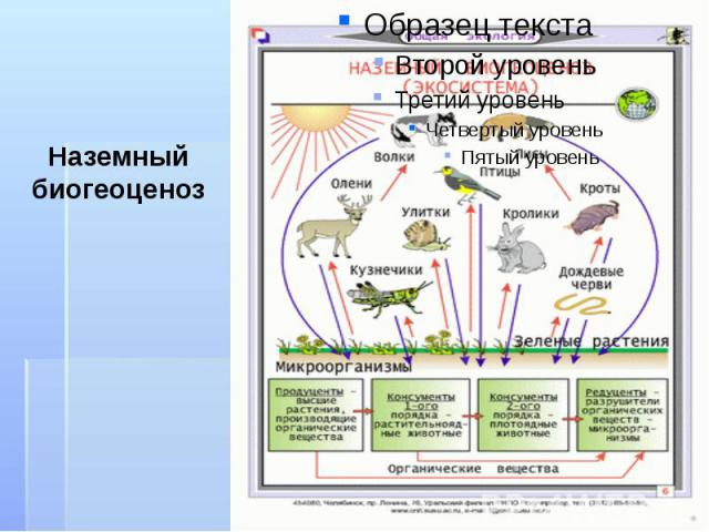 Наземный биогеоценоз