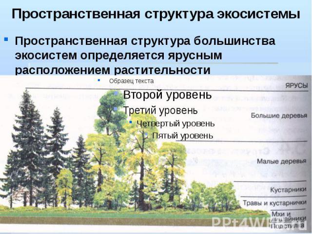 Пространственная структура экосистемы Пространственная структура большинства экосистем определяется ярусным расположением растительности