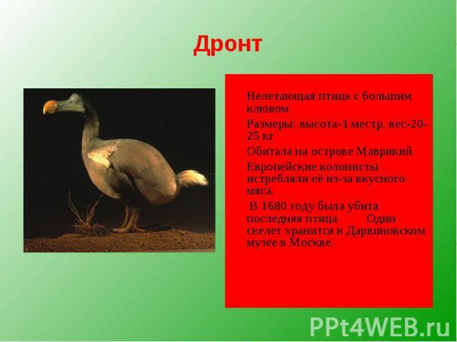 Дронт Нелетающая птица с большим клювом Размеры: высота-1 местр, вес-20-25 кг Обитала на острове Маврикий. Европейские колонисты истребляли её из-за вкусного мяса. В 1680 году была убита последняя птица. Один скелет хранится в Дарвиновском музее в Москве.