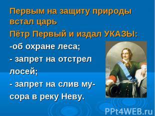 Первым на защиту природы встал царь Первым на защиту природы встал царь Пётр Пер