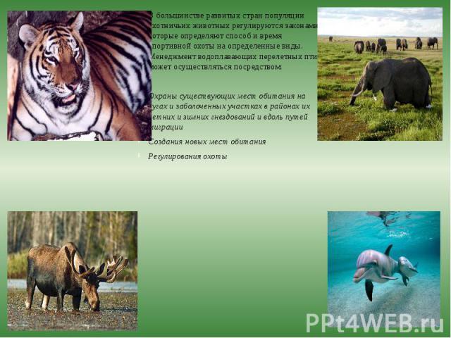 В большинстве развитых стран популяции охотничьих животных регулируются законами, которые определяют способ и время спортивной охоты на определенные виды. Менеджмент водоплавающих перелетных птиц может осуществляться посредством: В большинстве разви…