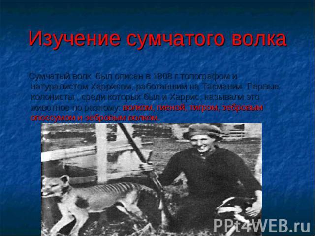 Изучение сумчатого волка Сумчатый волк был описан в 1808 г топографом и натуралистом Харрисом, работавшим на Тасмании. Первые колонисты , среди которых был и Харрис, называли это животное по разному: волком, гиеной, тигром, зебровым опоссумом и зебр…