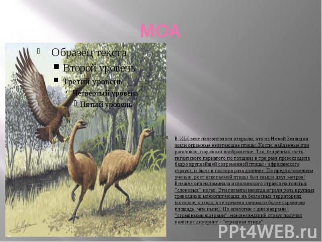 МОА В XIX веке палеонтологи открыли, что на Новой Зеландии жили огромные нелетающие птицы. Кости, найденные при раскопках, поражали воображение. Так, бедренная кость гигантского пернатого по толщине в три раза превосходила бедро крупнейшей современн…