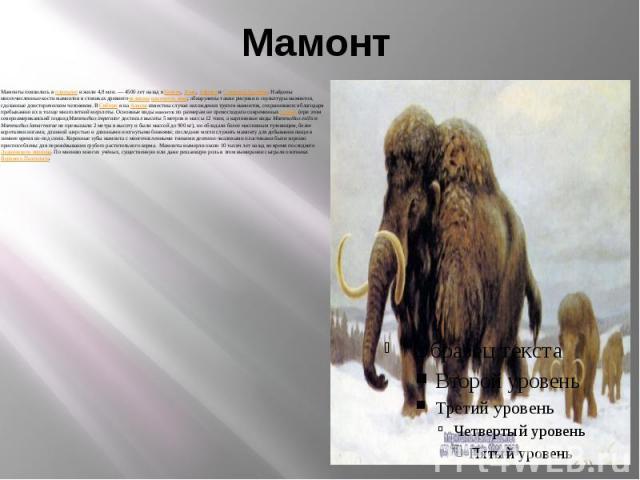Мамонт Мамонты появились в плиоцене и жили 4,8млн.— 4500 лет назад в Европе, Азии, Африке и Северной Америке. Найдены многочисленные кости мамонтов в стоянках древнего человека каменного века; обнаружены также рисунки и скульптуры мамонт…