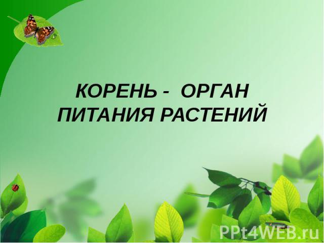 КОРЕНЬ - ОРГАН ПИТАНИЯ РАСТЕНИЙ