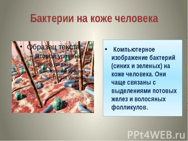 Бактерии на коже человека Компьютерное изображение бактерий (синих и зеленых) на коже человека. Они чаще связаны с выделениями потовых желез и волосяных фолликулов.