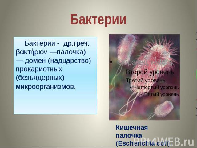 Бактерии Бактерии - др.греч. βακτήριον —палочка) — домен (надцарство) прокариотных (безъядерных) микроорганизмов.