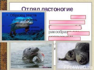 Отряд ластоногие Питаются рыбой, ракообразными, моллюсками На суше отдыхают, раз