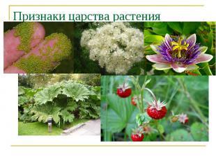 Признаки царства растения