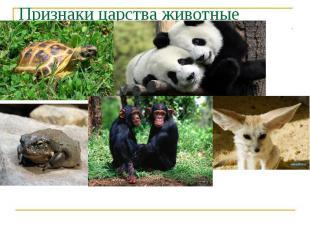 Признаки царства животные