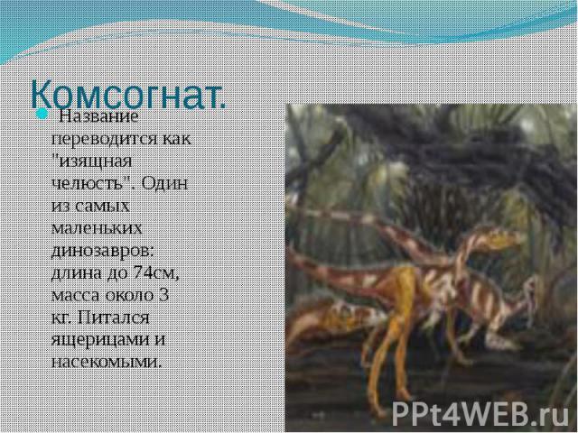 """Комсогнат. Название переводится как """"изящная челюсть"""". Один из самых маленьких динозавров: длина до 74см, масса около 3 кг. Питался ящерицами и насекомыми."""