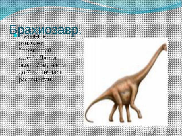"""Брахиозавр. Название означает """"плечистый ящер"""". Длина около 23м, масса до 75т. Питался растениями."""