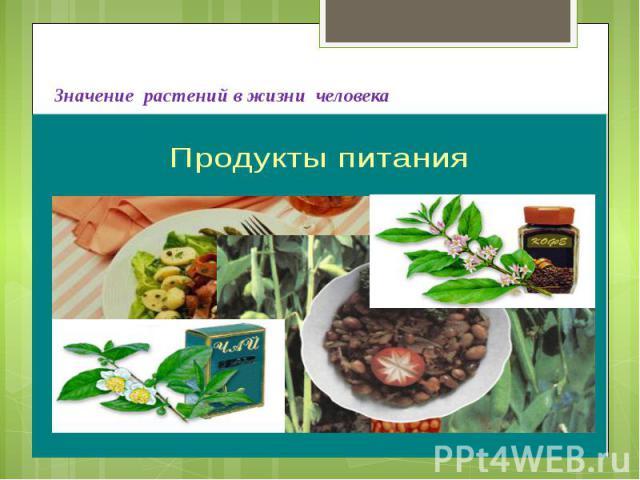 Значение растений в жизни человека