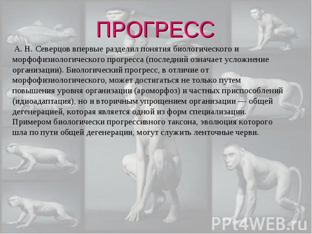 А. Н. Северцов впервые разделил понятия биологического и морфофизиологического прогресса (последний означает усложнение организации). Биологический прогресс, в отличие от морфофизиологического, может достигаться не только путем повышения уровня орга…